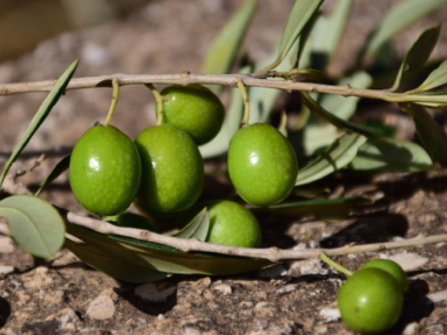 Italian olives easter tradition