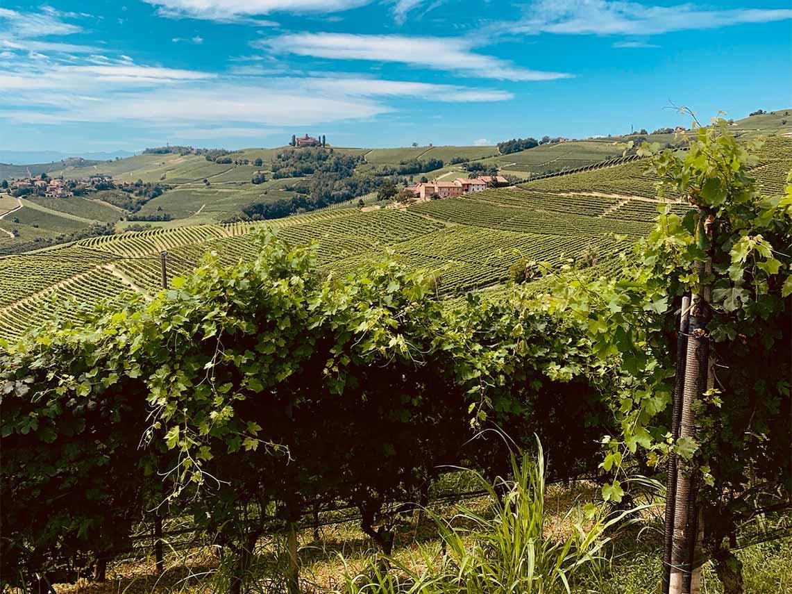 Piedmont, Barolo, Wine, Vineyards, Italy