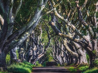 Visit the real life dark hedges from game of thrones in county antrim, ireland.